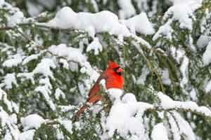 Bird & Nature Photography Portland, ME