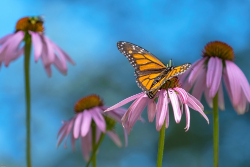 Butterfly/Insects