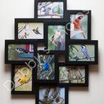 Bird Photography Collage