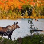 Nature & Wildlife Photos For Sale Brunswick, Maine