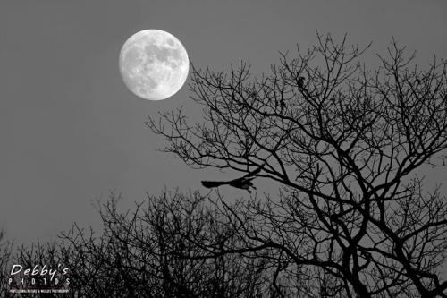 Sun, Moon, Clouds